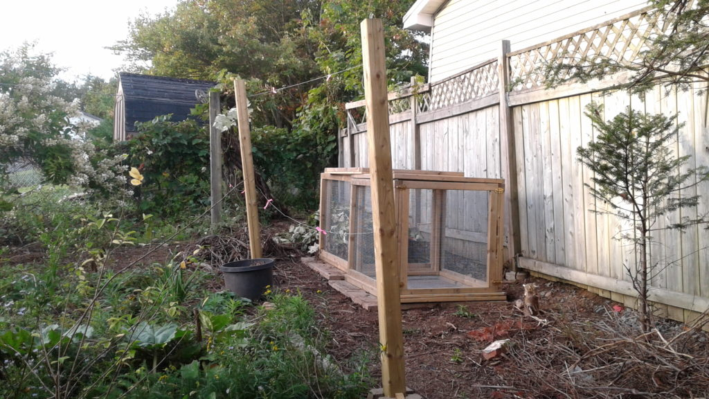 The new grape trellising and compost boxes
